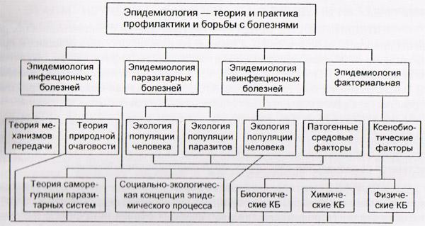 Структура современной эпидемиологии