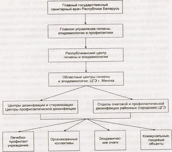 Структура дезинфекционной службы